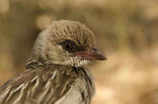 Необычный симбиоз между птицами и человеком