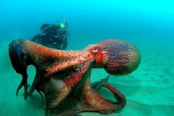 Сколько же обитателей живет в океанах?