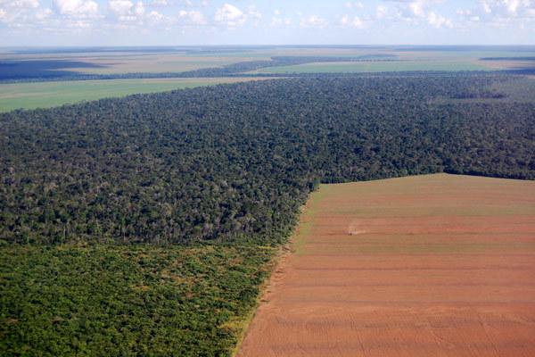 Вырубка лесов - вторая по величине причина парниковых газов в мире