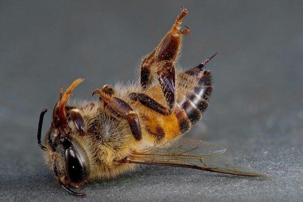 Как остановить вымирание насекомых