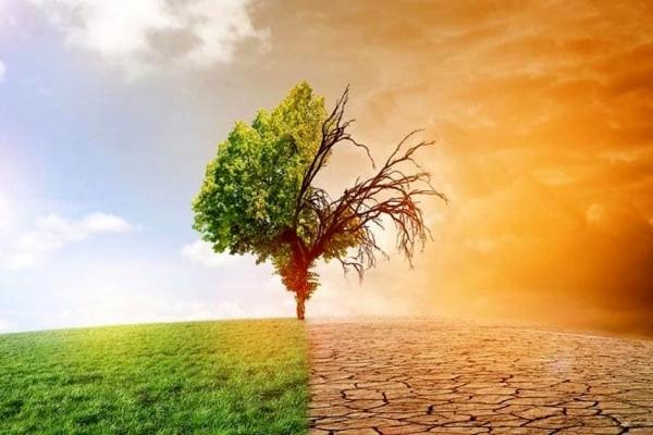 Почему утрата биоразнообразия вредит людям так же, как изменение климата