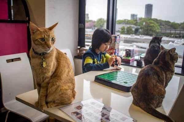 Японские кафе с животными: гуманно или нет?