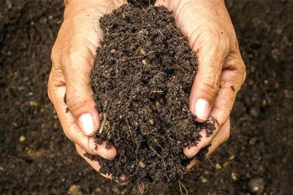 В Америке начали узаконивать компостирование после смерти