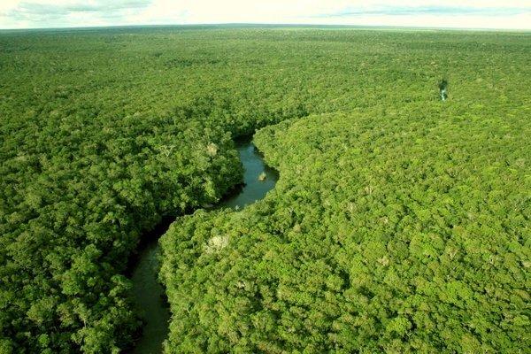 Лесов на Земле стало больше на 7%