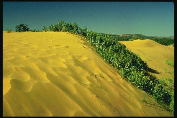 Озеленение Сахары. Возможно ли это?