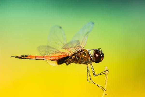 Как предки насекомых учились летать