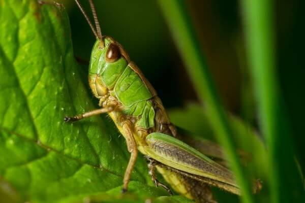 Растения могут слышать насекомых