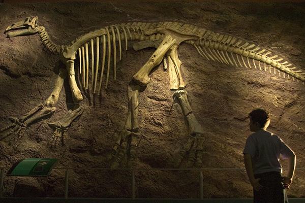 Необычная находка в Италии: кем были предки тираннозавров и птиц