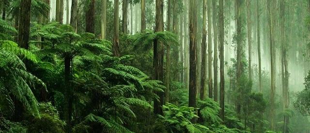 Защита тропических лесов - почему это так важно