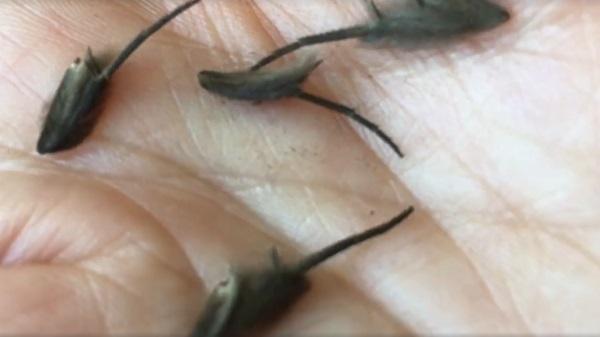 На кухне жителя Нового Зеландия поселились странные мохнатые существа