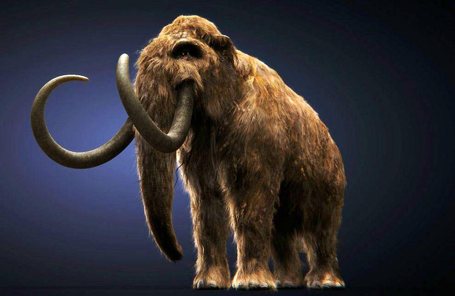 Ученые начали воскрешать вымерших зверей из Ноева Ковчега