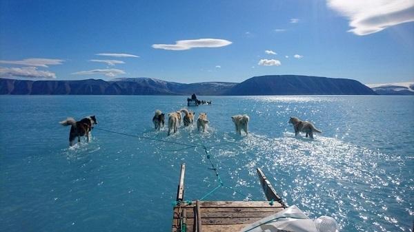 Собаки гуляют прямо по воде: изменение климата привело к рекордному таянию льдов в Гренландии