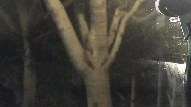 В Канаде сделали фото дерева с человеческим лицом