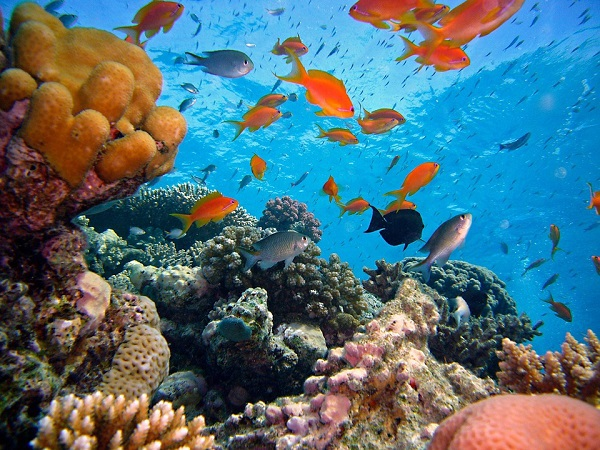 Гибель коралловых рифов несет в себе страшную опасность