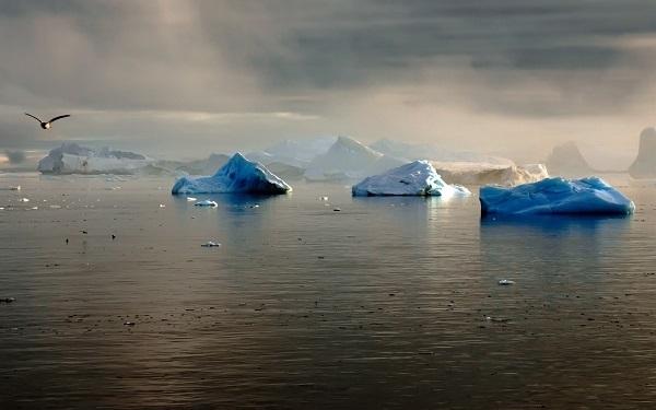 Какой была первая экспедиция в Арктику