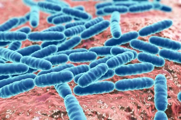 Большинство микробов в вашем кишечнике передаются по наследству