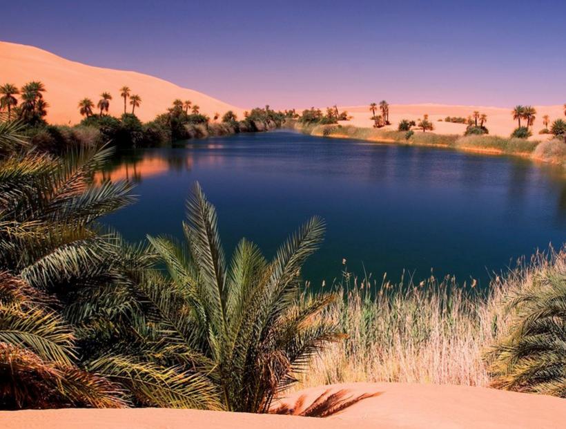 Потоп в песках: инновационные способы добычи воды в пустыне