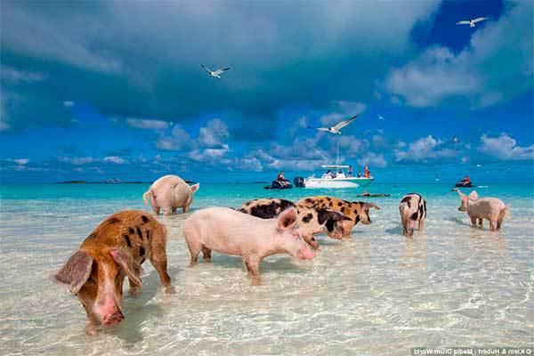Жизнь людей на островах