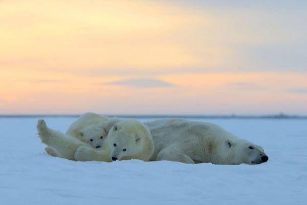 Большой Арктический заповедник - жемчужина Севера!