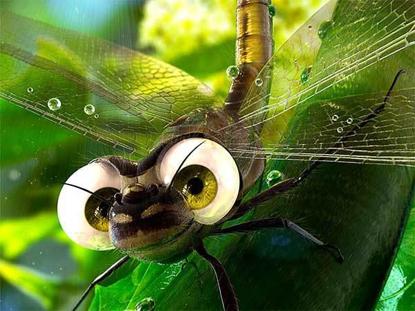 Насекомые: интересные факты о стрекозе