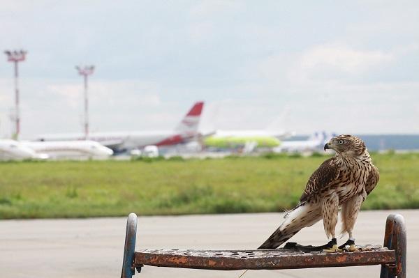 Как помочь птицам и самолетам избежать встречи
