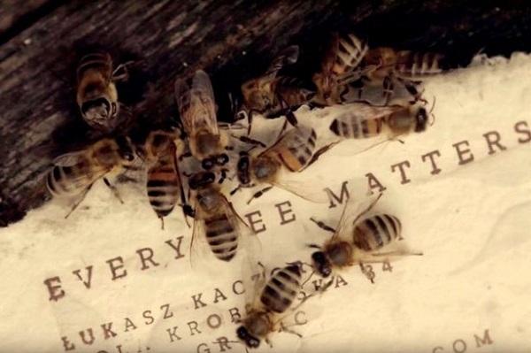 Съедобная бумага для пчёл: один из способов спасти насекомых от вымирания