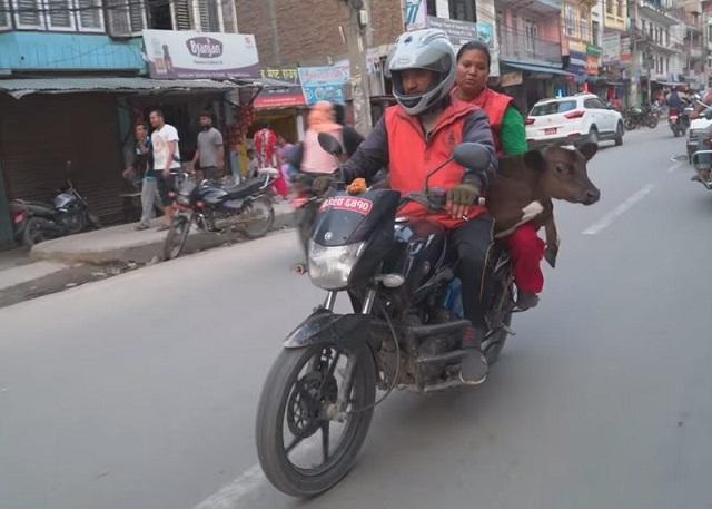 Как житель Непала спас 160 бездомных коров