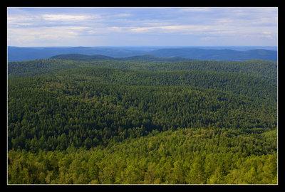 900 миллионов гектаров под посадку лесов обнаружили экологи