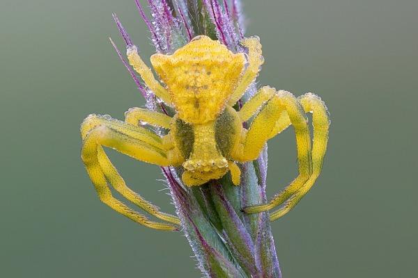 Ядовитый паук напугал жителей одного из сел в Казахстане