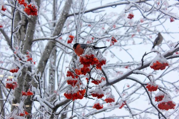 Эколог рассказал, чем кормить зимующих птиц