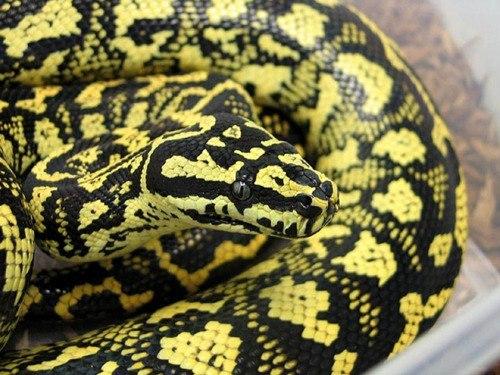 В Великобритании выбросили в мусорный бак 16 змей
