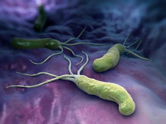 Известная бактерия