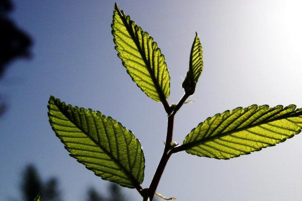 Как был открыт фотосинтез?