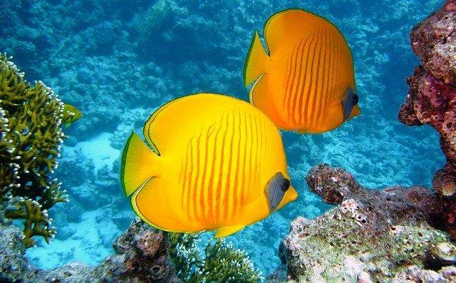 Экологи: обитатели океанов защищают людей от вирусов
