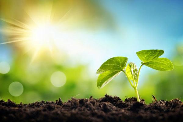 Несколько советов, как сделать свой быт экологичнее