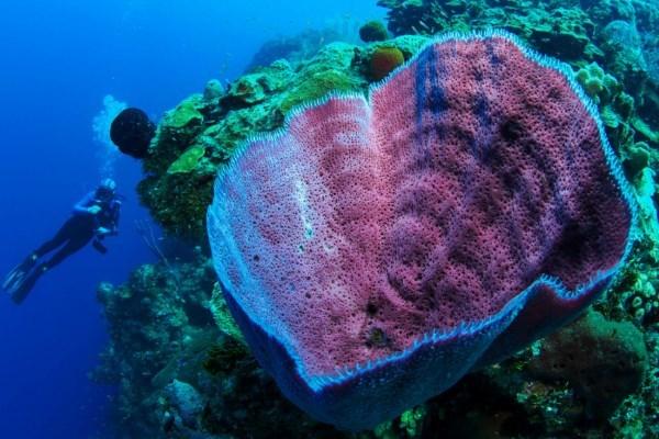 У побережья Тасмании обнаружен невероятный вулканический подводный мир