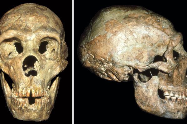 Череп из пещеры Апидима может переписать историю человечества