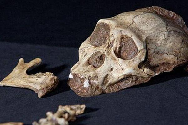 Спорный череп Апидима, которому 210 тысяч лет