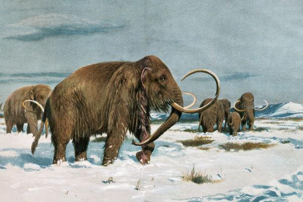 Малоизвестные факты о мамонтах