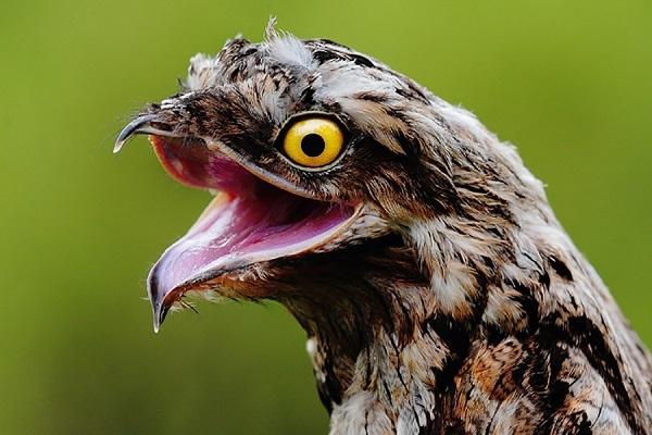 Выразительные глазки птички
