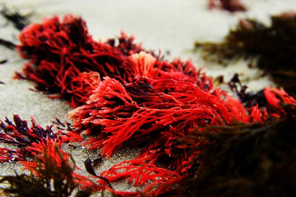 Необычные природные явления. Что такое красный прилив? Часть 2
