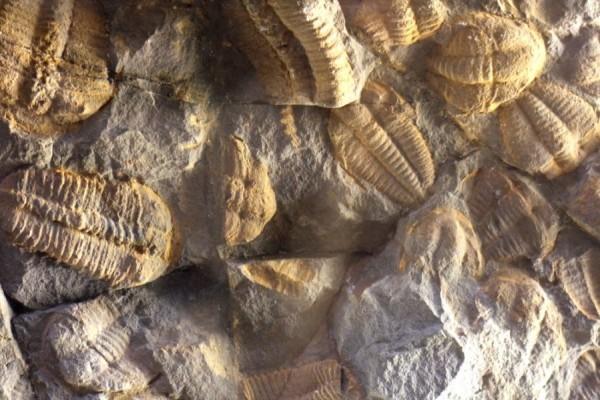 Самые древние окаменелости, которые были найдены, могут оказаться просто камнями