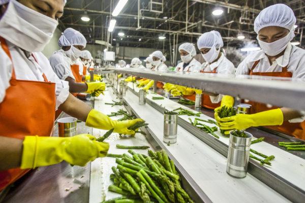 Глобализация пищевой промышленности: как технический прогресс изменил наше питание