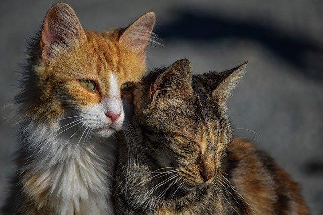 Путин обещал оказать поддержку приютам для животных