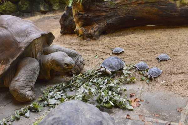 Самый старый случай рака кости диагностирован у 240-миллионной черепахи без раковины