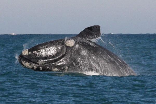 Редкий кит появился в акватории заповедника