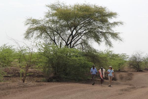 В Эфиопии за  день высадили свыше 350 миллионов деревьев
