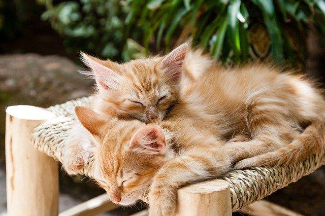 Ученые выяснили, чем питались предки домашних кошек