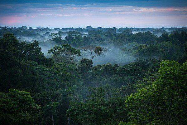 Площадь лесов на нашей планете стала гораздо больше