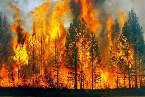 Лесные пожары в Якутии распространились более чем на 1,2 млн гектаров